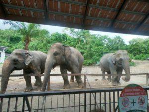 綠山動物園