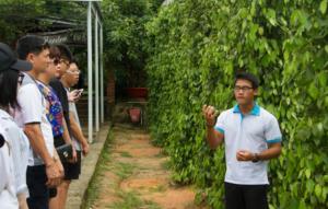 胡椒種植園