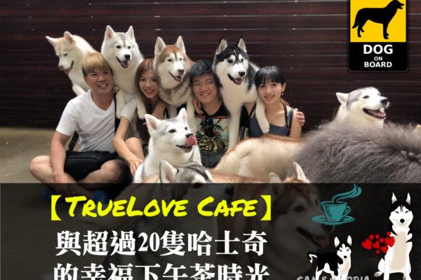 【TrueLove Cafe】在曼谷與超過20隻哈士奇的幸福下午茶時光
