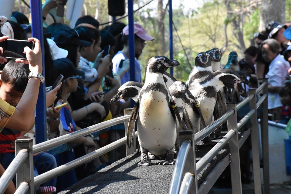 企鵝大遊行
