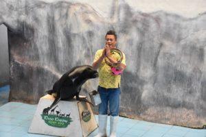 海獅的表演
