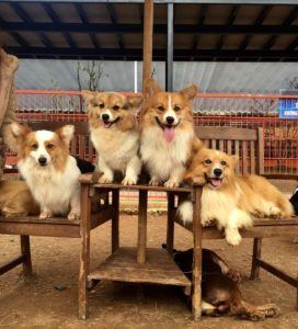 Nông Trại Cún - Puppy Farm (毛小孩農場)